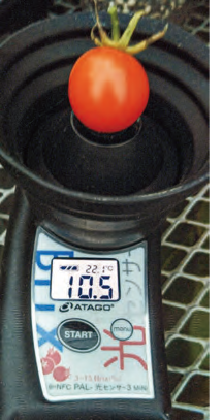 HB―101を使って糖度が増しています。