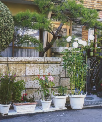 家の前の植物が、HB―101で良く生育しています。