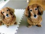 HB―101とニャンケンポンのおかげで2匹の犬は、とても元気です。