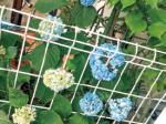 HB-101と顆粒HB-101は植物を蘇生させ、活力を与えてくれます。