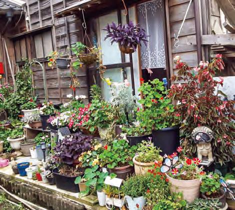 HB―101で左の写真の植物がものすごく生き生きと育ち、右の写真の花壇が見事です。