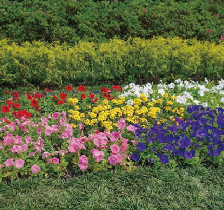 花壇の花々をいつまでも美しくするために、HB―101を使っています。