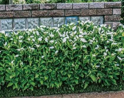 HB-101で庭の植物は超元気です。