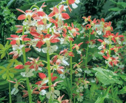 HB-101と顆粒HB-101と活力肥と白HB-101できれいな花が咲きます。