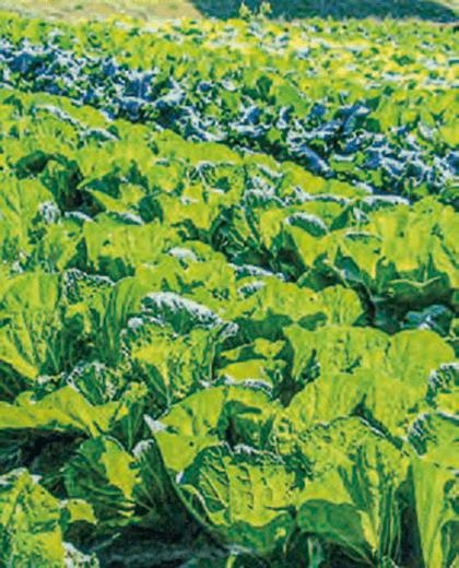 イネと野菜を栽培しています。土作りと植え付け時にHB-101は欠かせません。