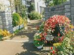 HB-101で家の植物が超元氣になり、花は美しく咲いています。