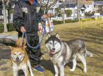 HB-101とニャンケンポンのおかげで、犬は病気と無縁で、毎日散歩出来る程元気です。
