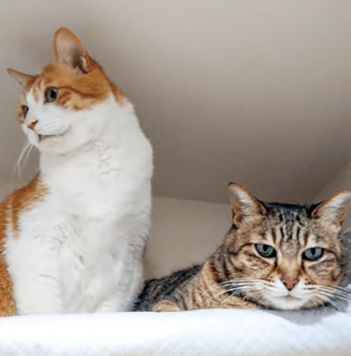 猫使用イメージ