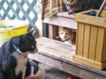 HB-101育ちの3匹の猫はいつも元気いっぱいです。